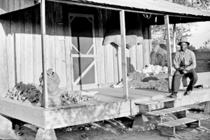 One of the sharecropper's houses with sweet potatoes and cotton on the porch, Knowlton Plantation, Perthshire, Mississippi Delta, Mississippi, 1939