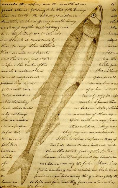 lewis-and-clark-journal-feb-24-1806-euchalon-candlefish