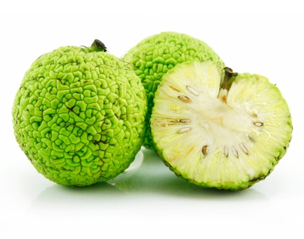 Sliced Osage Oranges (Maclura) Isolated on White